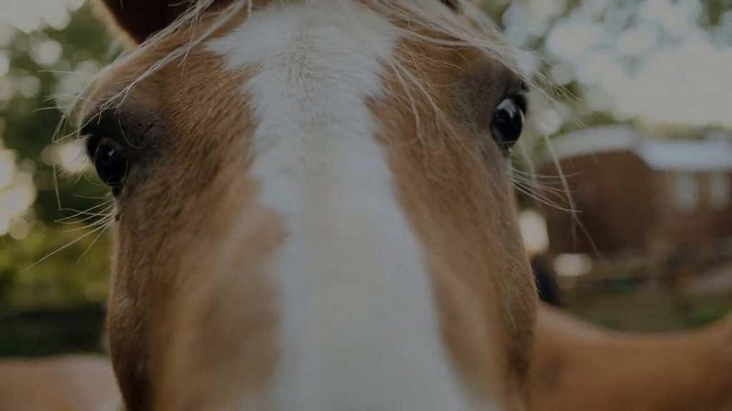 EifelRanch - mit Pferden unterwegs